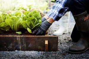 Family Farming Itu Berkebun Keluarga Dengan Manfaatkan Lahan Rumah