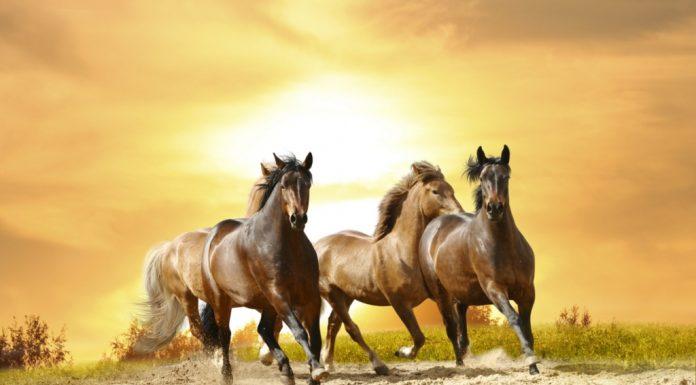 Jangan Melalaikan Shalat: Kisah Nabi Sulaiman dan Kuda-kudanya