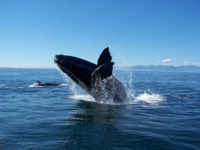 Kisah Nabi Yunus AS Yang Ditelan Ikan Nun