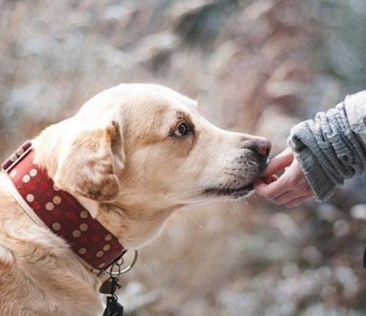 Ngeyel Pelihara Anjing