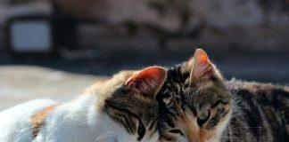 Perempuan di Malaysia Ditangkap Karena Pukul Kucing Sampai Mati