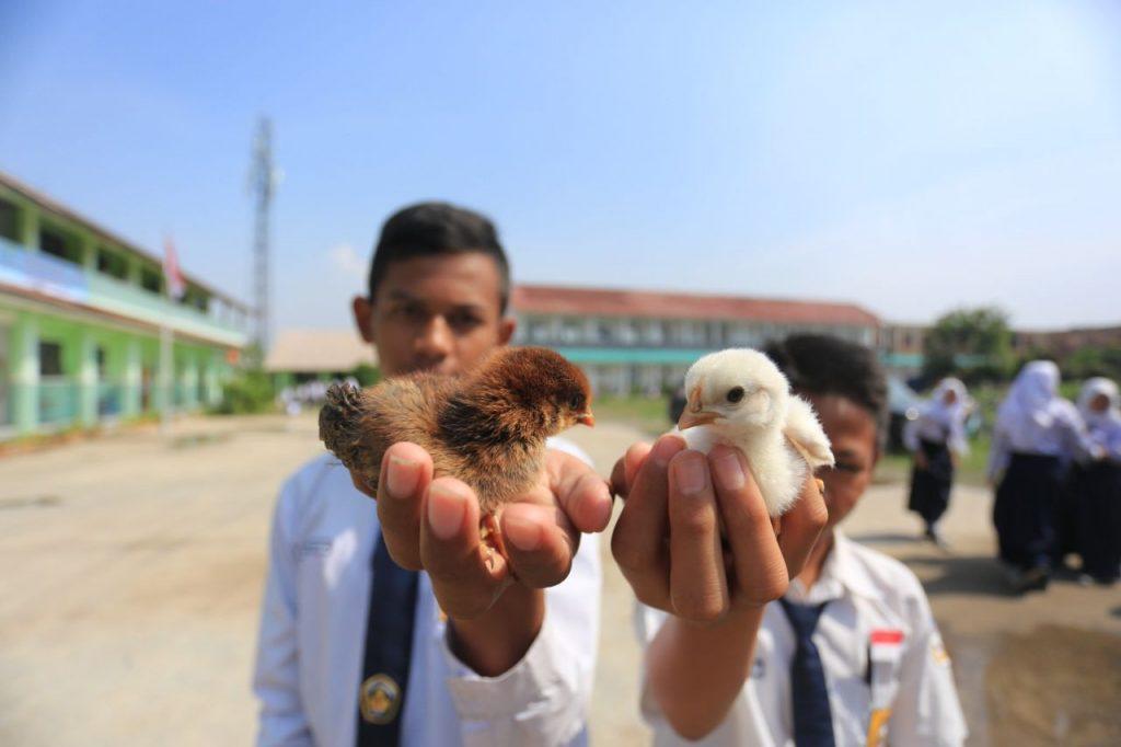 Program Chickenisasi 1