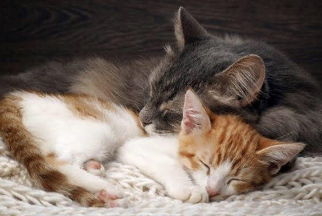 Sayangi Kucing 2