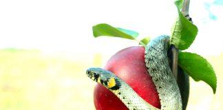 Sejarah Islam: Adam dan Hawa, Manusia Pertama yang Diturunkan Allah ke Bumi