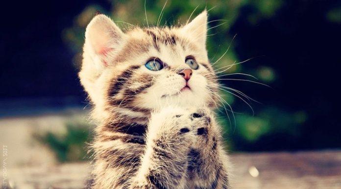 Viral Kucing Diinjak Hingga Tewas Begini Hukumnya