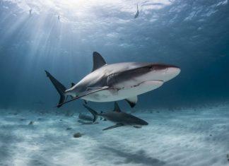 Ikan yang Mencari Lautan