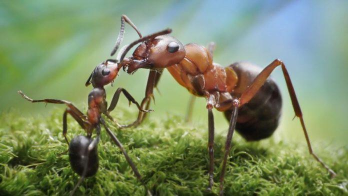 Kisah Para Nabi: Sulaiman Dan Semut-Semut