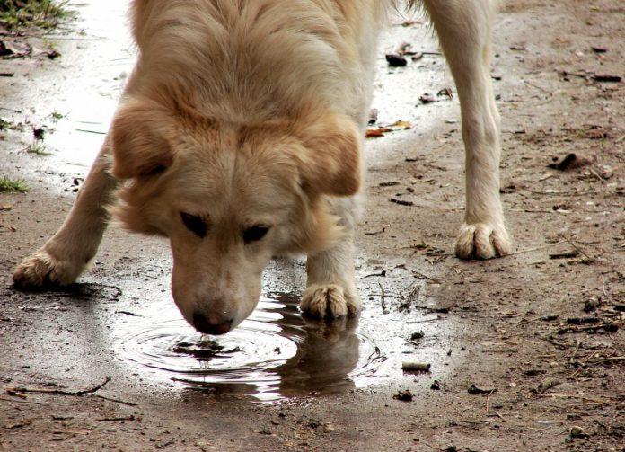 Keluasan Rahmat Allah: Lelaki yang Memberi Minum Seekor Anjing