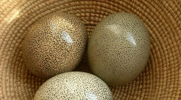 motivasi islam semangat sedekah dari telur burung unta dan telur cicak