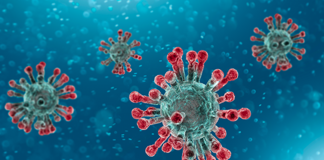 virus corona berasal dari
